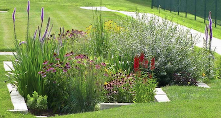 Community Program: Learn to Build a Rain Garden